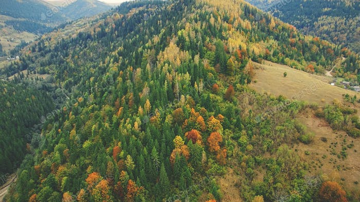 autumn mixed forest on carpathian mountain slope