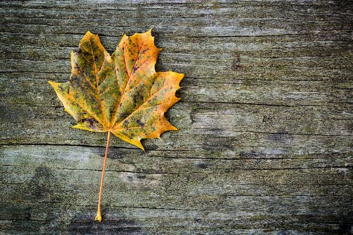 Single autumn leaf over wooden backgound