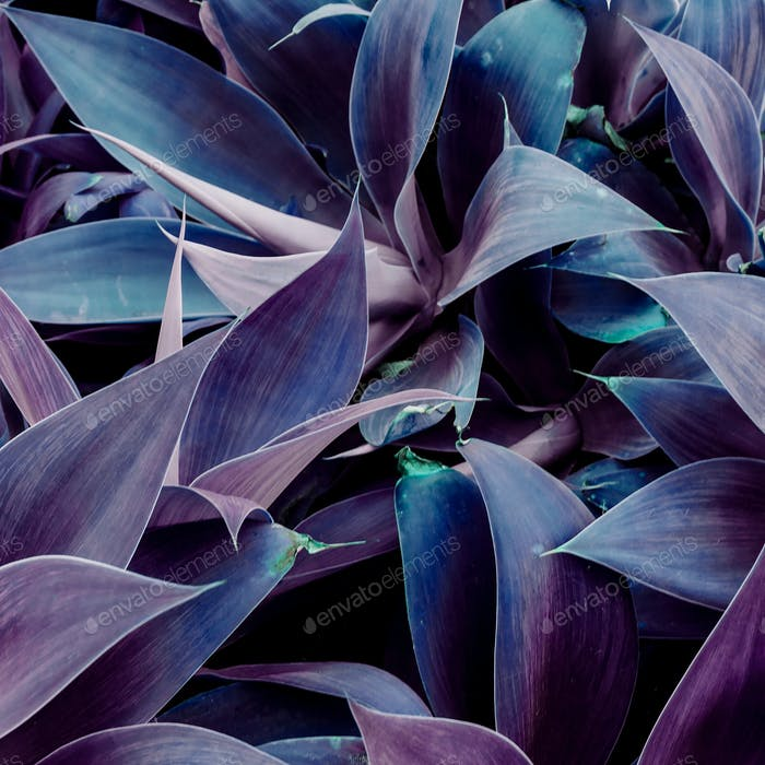 Tropical plant background. Violet mood