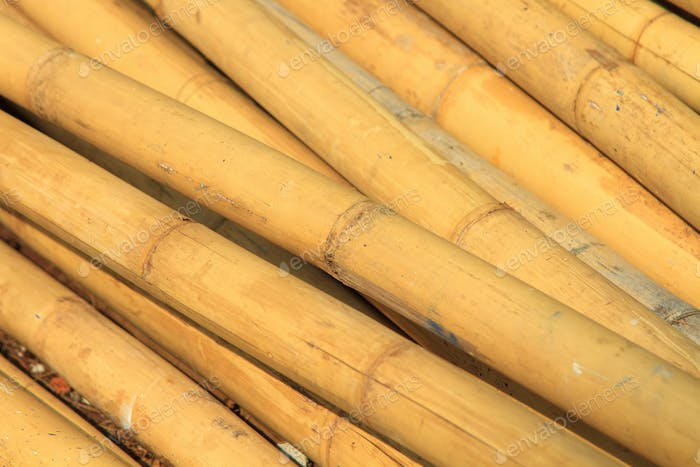 Pile of bamboo
