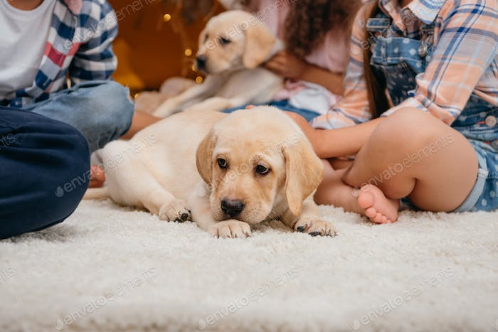 selective focus of little cute labrador puppy lying on floor at home