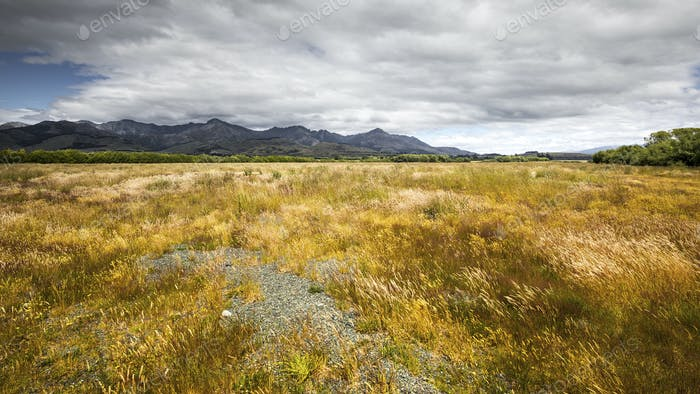 typical meadow in New Zealand