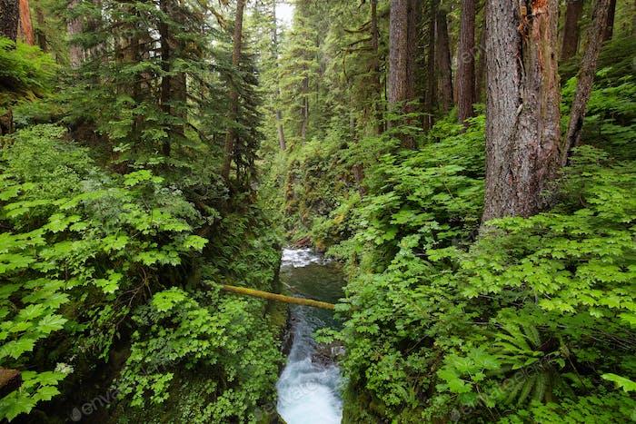 Sol Duc falls trail, Olympic national park, WA, US
