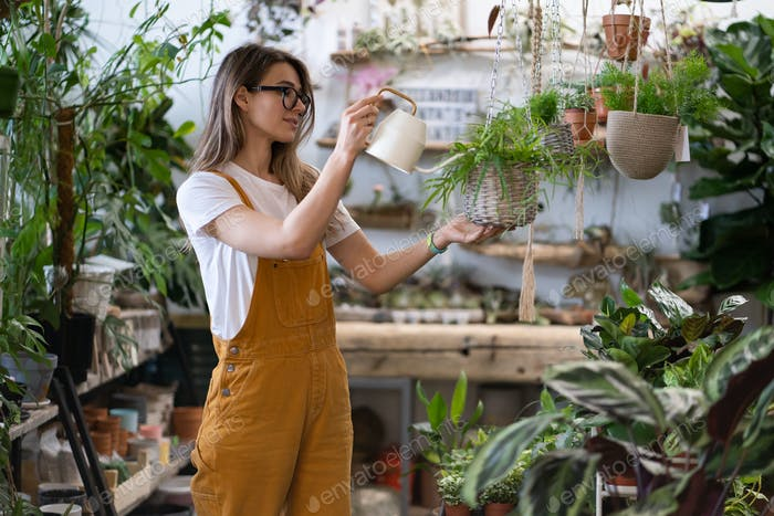Gärtnerin gießt Pflanzen im Gewächshaus mit Gießkanne. Haus-Gartenarbeit. Ein kleines Unternehmen.