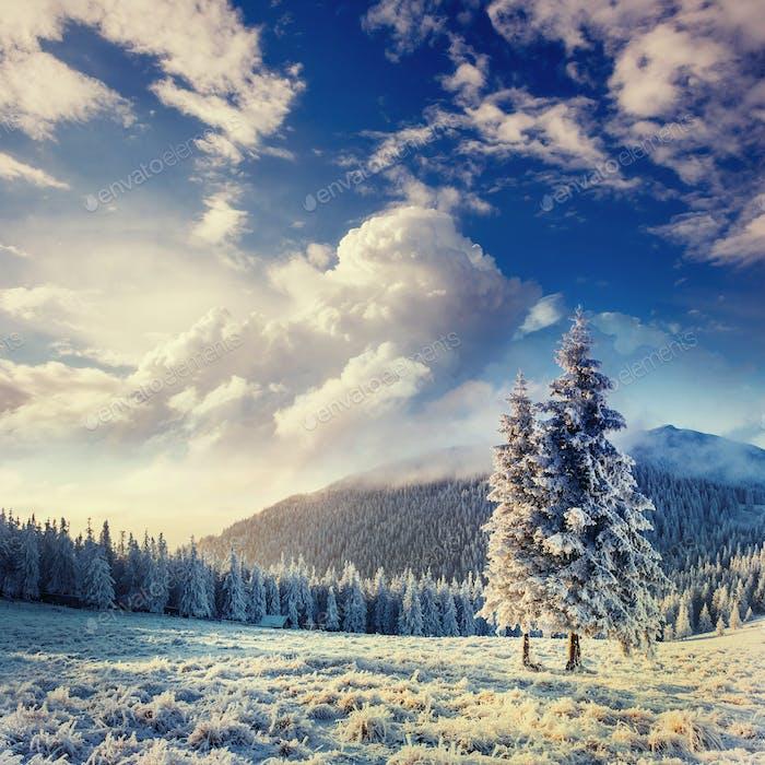 magical winter snow covered tree in the Carpathians. Ukraine, Eu