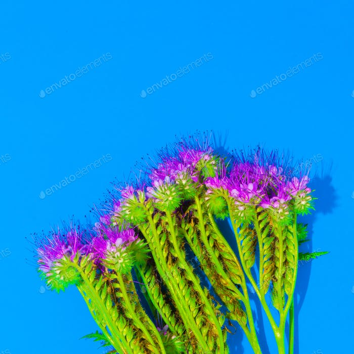 flower on blue background. minimal style