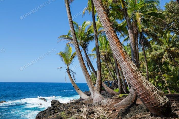 Hawaiianischer Strand