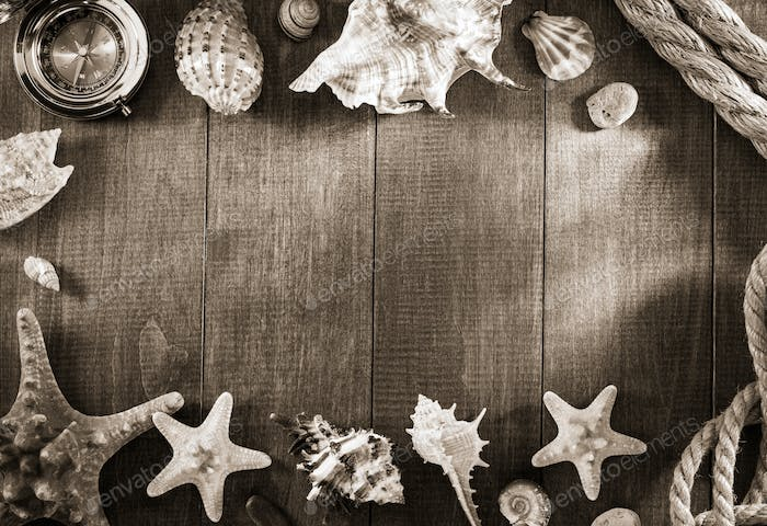 seashell on wooden background