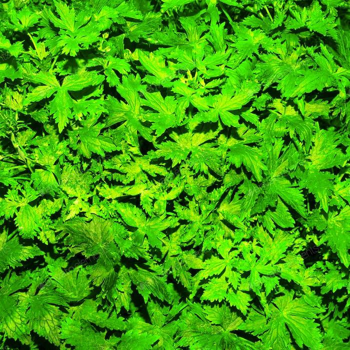 Background fresh green minimal style
