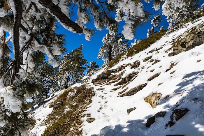 Hiking to the top of Mount San Antonio (Mt Baldy)