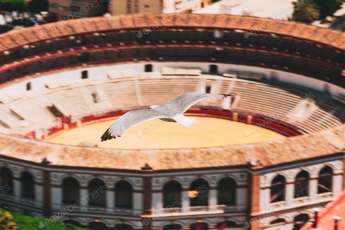 Malaga, Spain. Seagull flying over Plaza de Toros de Ronda bullring in Malaga, Spain. La Malagueta