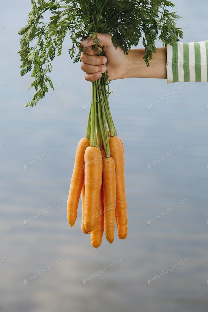Neun Jahre altes Mädchen mit Bio-Karotten