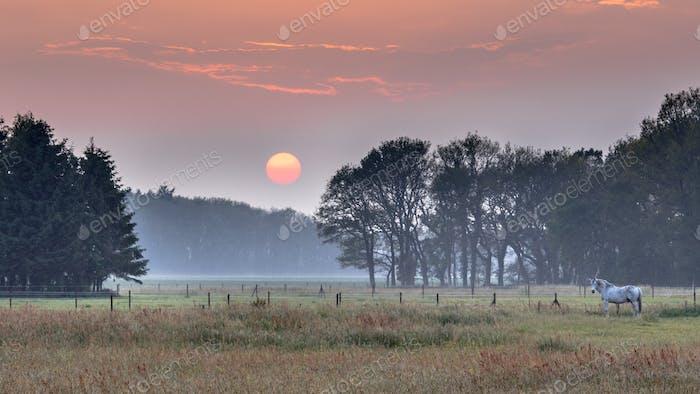 Sunset landscape horse