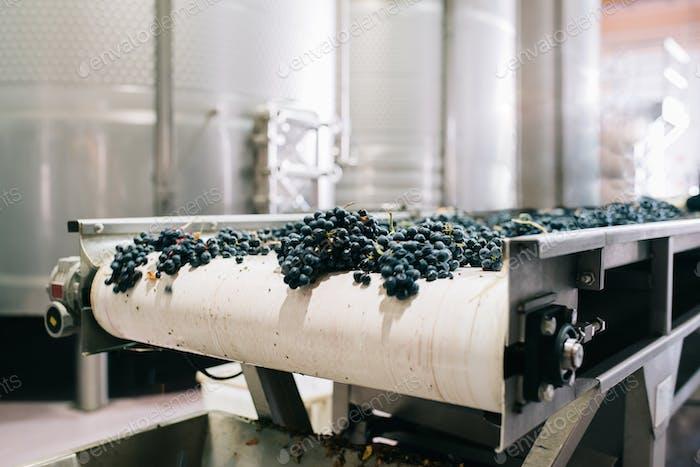 Moderne Weinkellerei Maschine mit Trauben