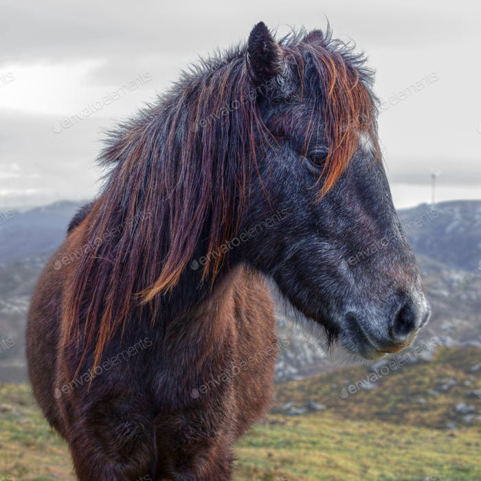 Wild horse isolated, side face