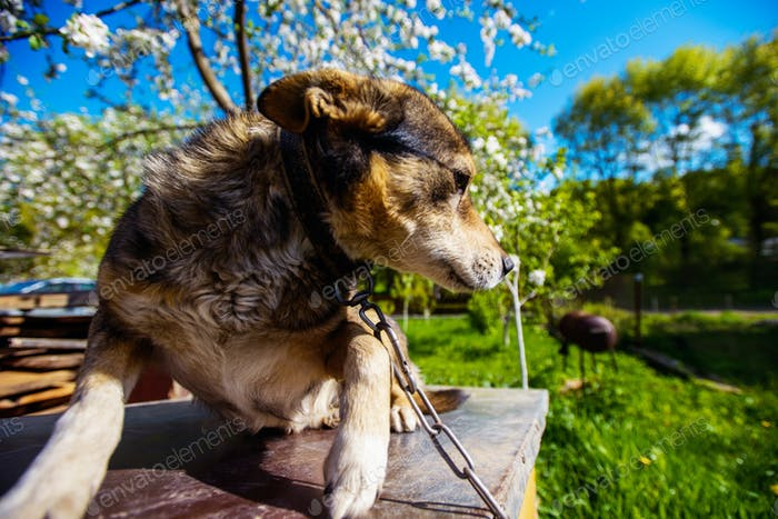 cute dog in the garden