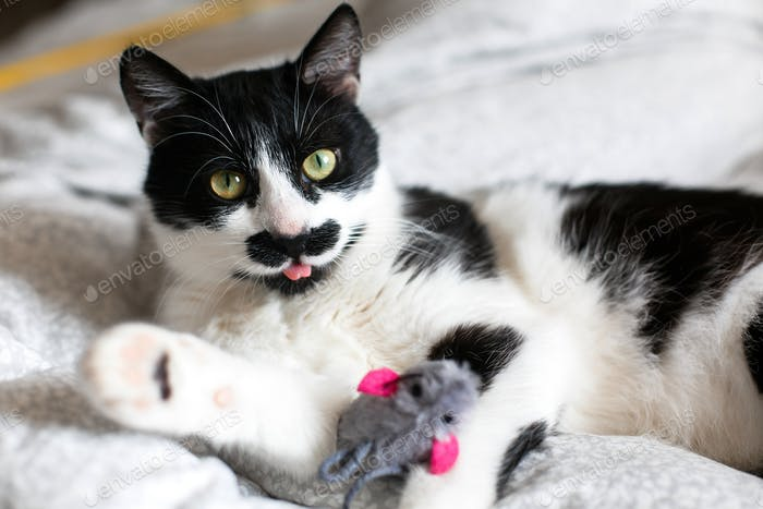 Cute black and white cat with moustache playing with mouse toy