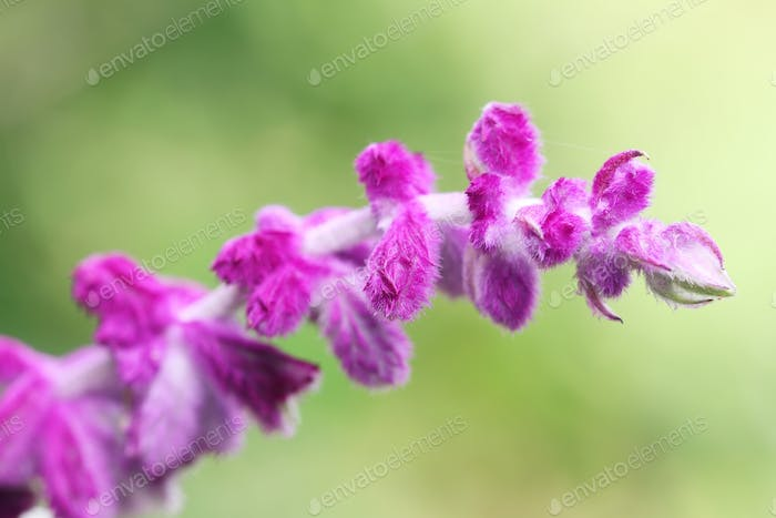 Close up of a beautiful wild flower