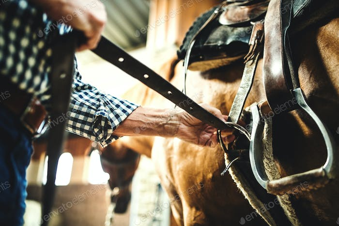 A close-up of a senior man putting a saddle on a horse in a stable.