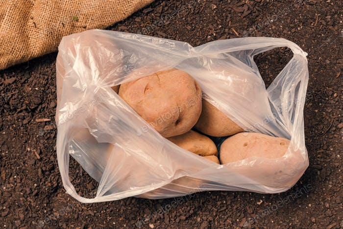 Organic potato tubers in plastic bag