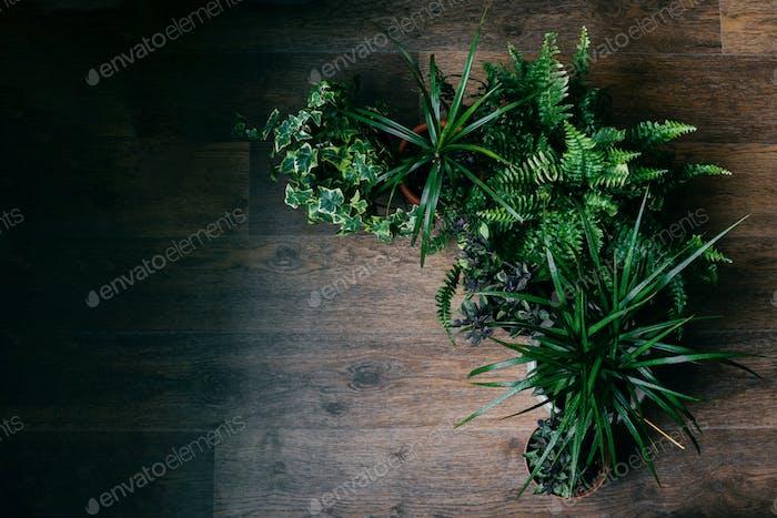 Houseplants on floor as a frame.