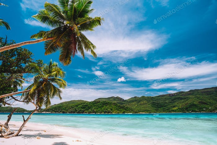 Palm trees on paradise beach with white sand and blue ocean lagoon. White clouds in blue sky