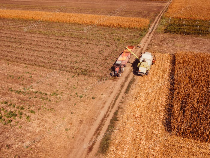 Aerial view of combine harvester pouring corn kernels into cart