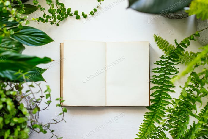 Book and plants