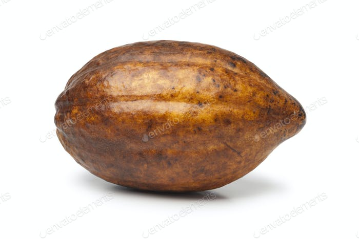 Single fresh cacao fruit
