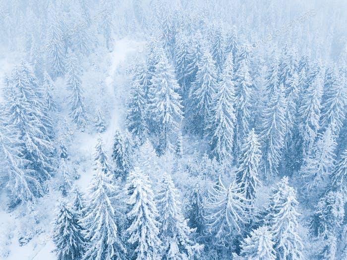 Flug über Schneesturm in einem verschneiten Berg Nadelwald, unc