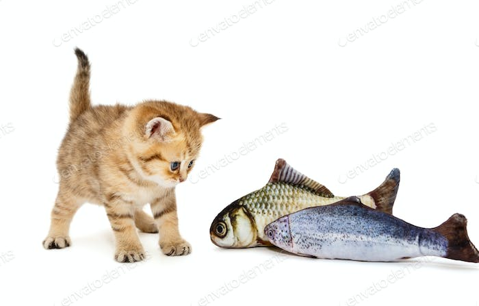 Little kitty and two fish