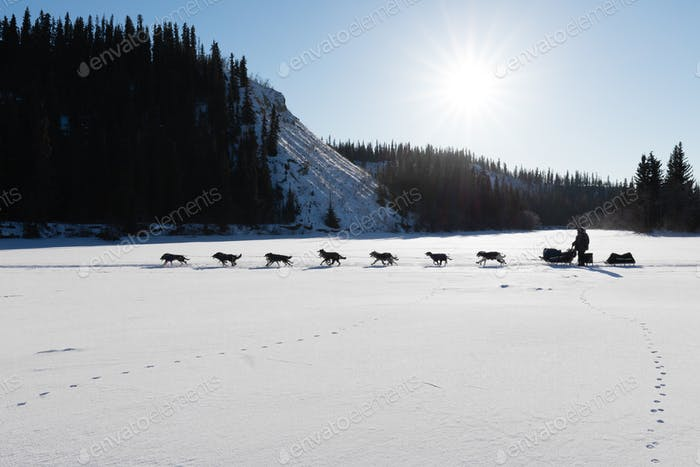 Dog sled racing in Yukon Quest