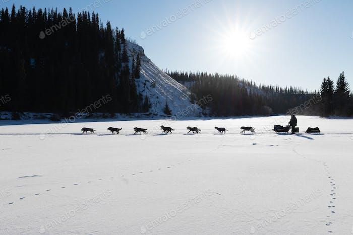 Hundeschlittenrennen in Yukon Quest