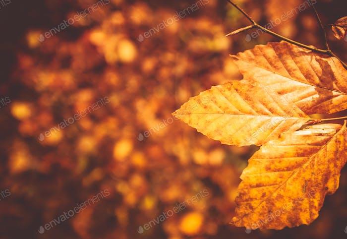 Arrière-plan du feuillage d'automne