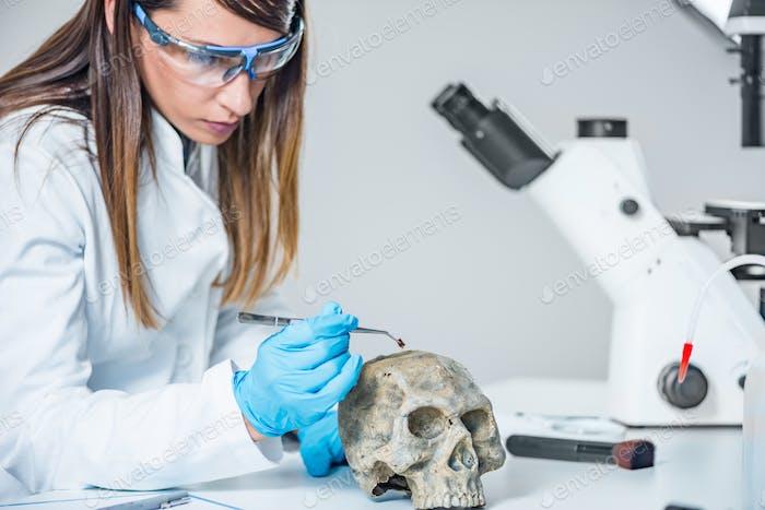 Forensische Wissenschaftler untersuchen menschlichen Schädel