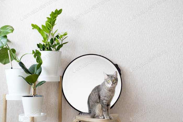 A gray cat is sitting on a wooden stool. cozy interior design of the living room in the Scandinavian