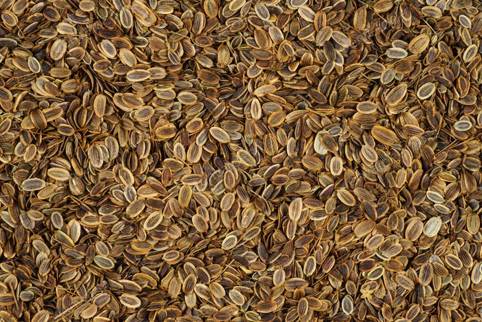 Food background: dill seeds