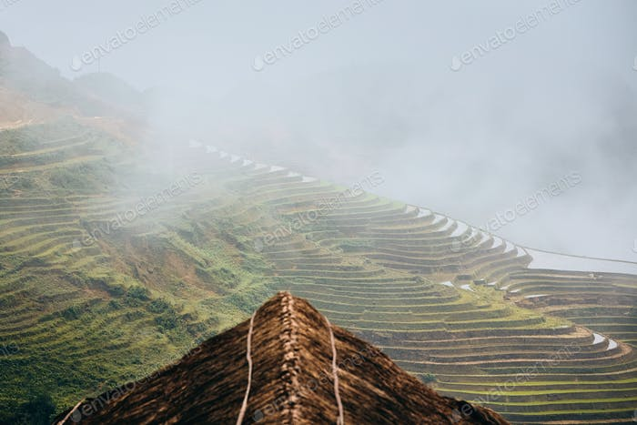 Rice terraced field