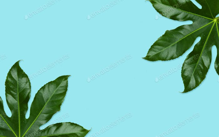 green leaves on blue background