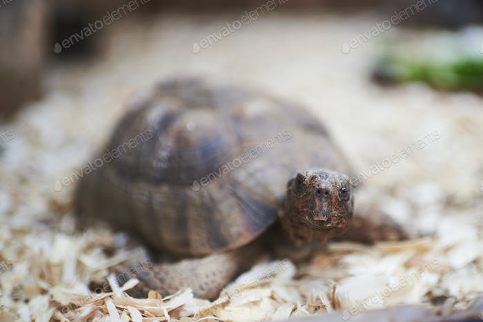 Portrait of a tortoise with the focus on the face