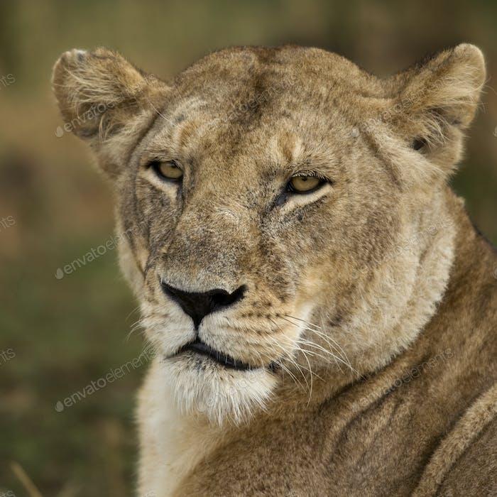 Close-up of Serengeti National Park, Serengeti, Tanzania, Africa