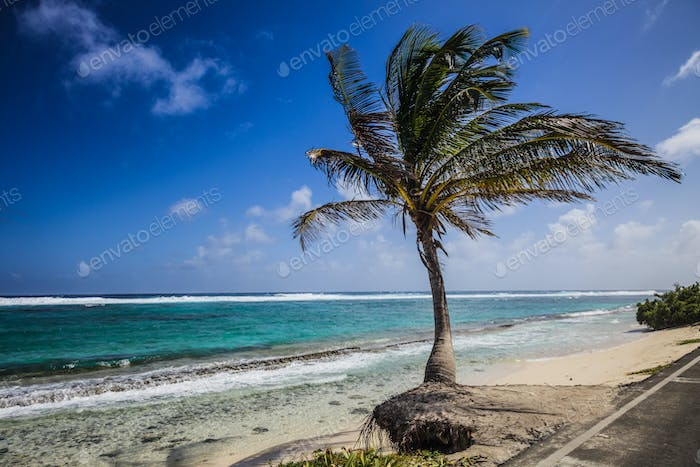 Big Palm Tree Facing the Beach