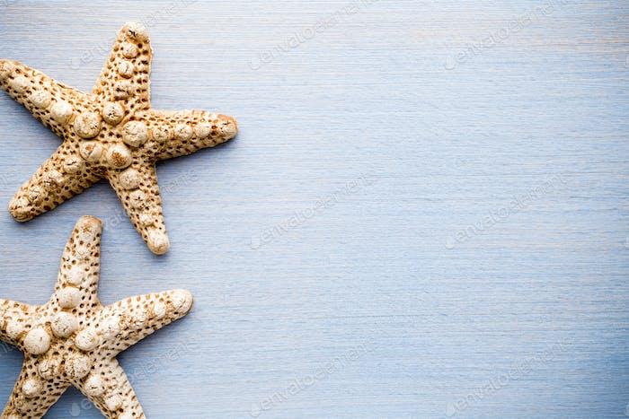 Starfish.