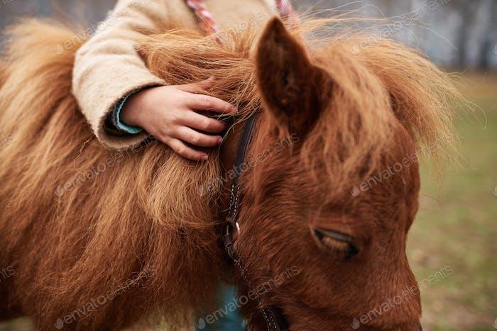 Schuss von unkenntlich Kind sanft berühren niedlichen Kastanie Pony Mähne