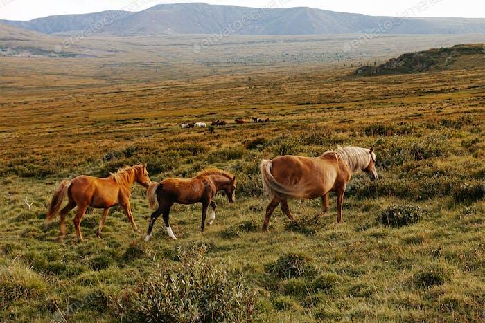 Schwangere Stute mit zwei Fohlen