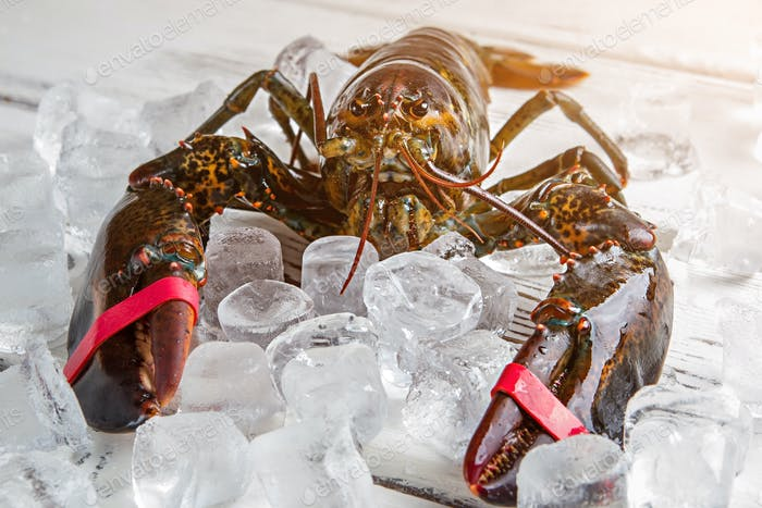 Ice cubes and raw lobster