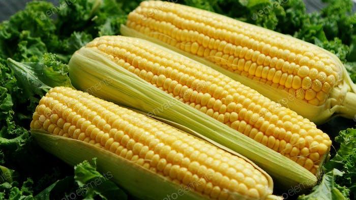 Corn ears in green