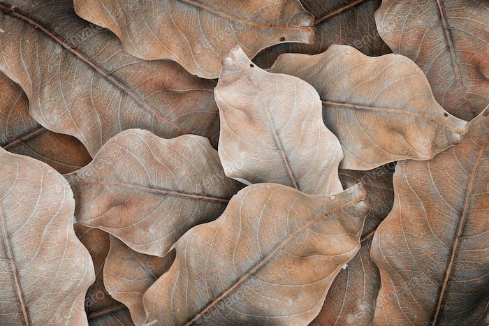 Beige leaf patterned background design space