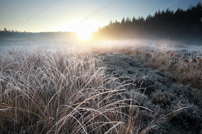 misty winter sunrise over frosted meadow