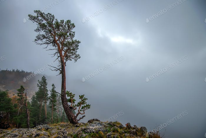 Fantasy Herbst Landschaft mit einsamen Baum